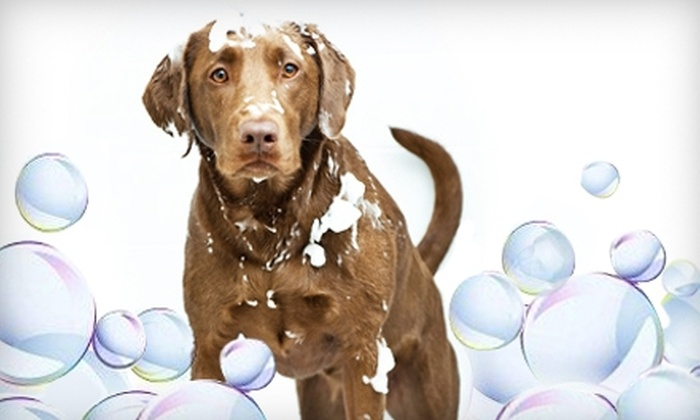 Puppy Sudz - 7: Half Off Dog Grooming and Bath at Puppy Sudz (Up to $60 Value). Choose from Three Options.