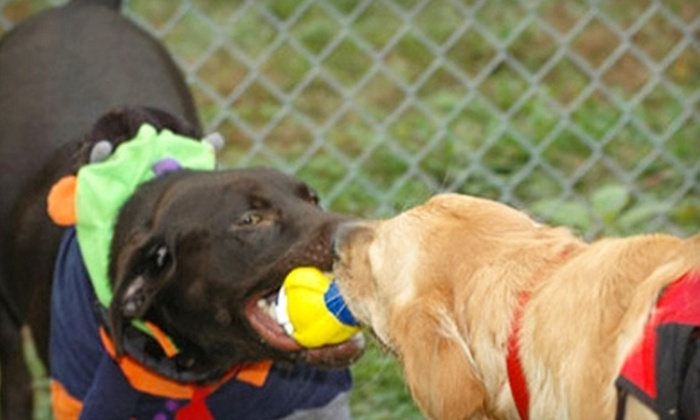 BrownDog Lodge - Memphis: $10 for Dog Daycare Services at BrownDog Lodge ($21 Value)