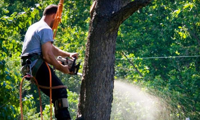 Adam's Pristine Acres - Fairfax: $99 for $250 Worth of Tree-Removal Services from Adam's Pristine Acres