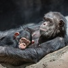 30% Off Zoo Admission at Los Angeles Zoo and Botanical Gardens