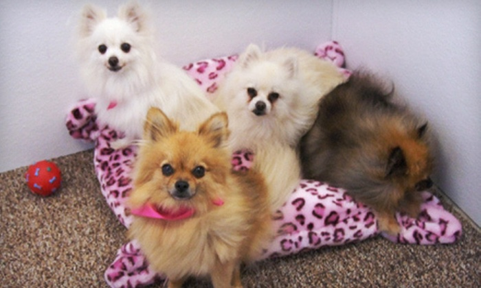 Scrubs Pet Care - Lake Elsinore: Grooming for One Small or Medium, Large, or Extra-Large Dog at Scrubs Pet Care in Lake Elsinore (Up to 55% Off)