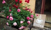 Set di 3 piante di rose