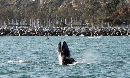 Whale-Watching Cruise for Adult, or Cruise for Child with Optional Book from Dana Wharf Whale Watching (Up to 61% Off)