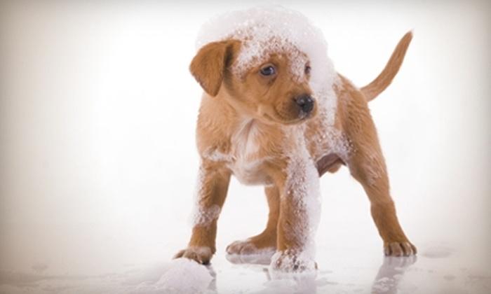 dirty hairy dog wash