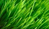 Pro Turf Lawn Service: Kansas City: $25 for a Lawn-Fertilization and Weed Treatment from Pro Turf Lawn & Tree Service ($50 Value)