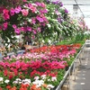 Half Off Plants in East Amherst