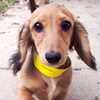 Up to 70% Off Pet Supplies, Daycare, or Boarding