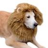 One Cat or Dog Lion Mane