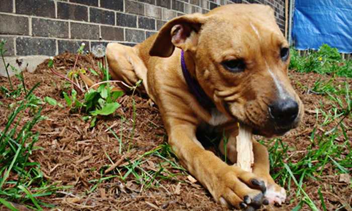 The Dog Haus Dog Daycare - Madison: Two or Three Days of Dog Boarding or Daycare at The Dog Haus Dog Daycare (Up to 53% Off)