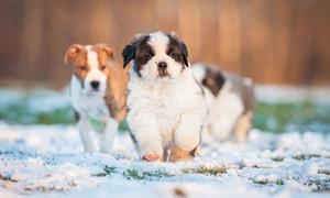 Cavalpedia-media: 2 Tagestickets für die CaniMedica-Hundemesse am Samstag, den 11.06.2016 oder Sonntag, den 12.06.2016 (50% sparen)