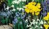 Spring Bulbs Collection