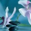 Formation en naturopathie