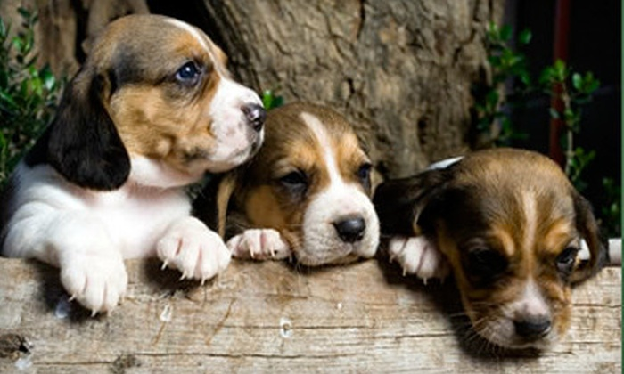 The Pet School and Hotel - Louisville: Night of Pet Boarding, Grooming for Dog or Cat, or One Month of Dog Training at The Pet School and Hotel (Up to 88% Off)