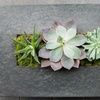 Up to 38% Off Succulent Class or Floral Crown Class