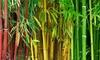 Collection de 3 bambous vert, jaune et rouge