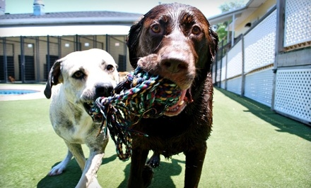 Two Days of Pet Day Care (a $48 value) - Pet Paradise in Plano