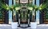 Hardy Asian Windmill Palms