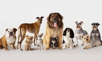 Double Adult Entry Ticket from R75 for Two to the WODAC Pet Expo (50% Off)