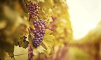 Yarra Valley: 1 or 2 Nights for Two People with Wine Tasting, Breakfast, Wine and Beer Samples at De'Vine Escape