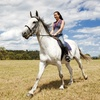 Up to 68% Off Riding Lessons