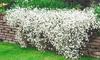 Pre-Order: Snow-in-Summer Flower Seed Mat & Soil Block (1-, 2-,4-Pk.)