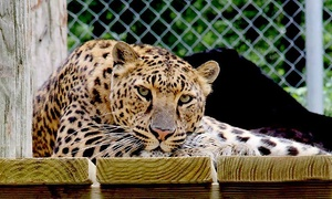 Up to 53% Off Admission to Wilderness Trails Zoo at Wilderness Trails Zoo, plus 6.0% Cash Back from Ebates.