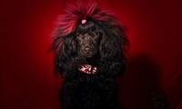 Sesión de peluquería canina con baño, arreglo, masaje y corte desde 9,90 € en Salón de Estética Canina Vila Dels Cans