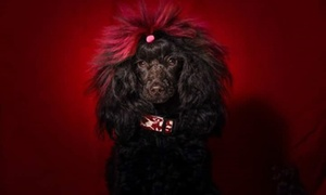 Salón de Estética Canina Vila Dels Cans: Sesión de peluquería canina con baño, arreglo, masaje y corte desde 9,90 € en Salón de Estética Canina Vila Dels Cans