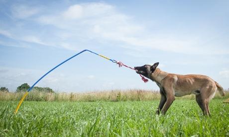 Tether Tug Outdoor Dog Toy dedf7b06-d5fb-11e7-b8ed-00259069d868