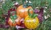 50% Off Hollow Pumpkin Workshop at Ohio City Glass