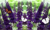 2er- oder 4er-Set Buddleja Schmetterlingspflanzen