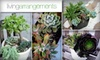 Living Arrangements LA  - Los Angeles: $40 for an Eco-Friendly Succulent Plant Arrangement from Living Arrangements ($70 Value)