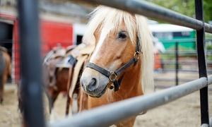 ecuries d'en cayla: Location de poney pendant 1h à 9,99 € aux Ecuries d'En Cayla