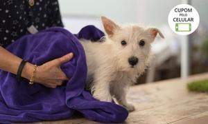 Pet Glamour S2 - Taguatinga Shopping: Banho + tosa higiênica + hidratação para cães no Pet Glamour S2 - Taguatinga Shopping