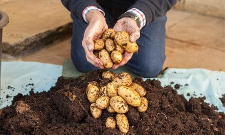 Patio Potato Growing Kit