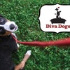 Diva Dogs Inc. - San Jose: $60 for Your Choice of One of Four Mobile Dog-Care Service Packages from Diva Dogs Inc. (Up to $140 Value)