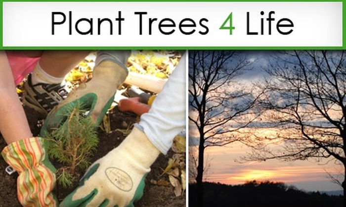 Plant Trees 4 Life - Tampa Bay Area: $21 for a Side-by-Side Tree Planting for a Loved One from Plant Trees 4 Life ($35 Value)