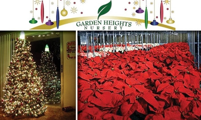 Garden Heights Nursery - Richmond Heights: $20 for $40 Worth of Fraser Firs, Poinsettias, and More at Garden Heights Nursery