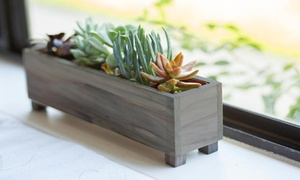 Redwood Succulent Window Box Planters (5 or 7 Succulents)