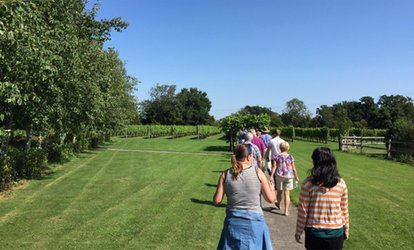 Shawsgate Vineyard Tour and Tasting for Two (40% Off)