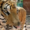 Up to 52% Off at Bailiwick Ranch & Discovery Zoo