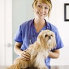 54% Off Veterinary Services
