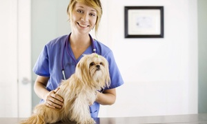 Saratoga Veterinary Hospital: $16 for $35 Worth of Veterinary Services — Saratoga Veterinary Hospital