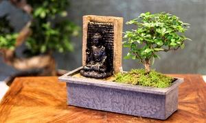 Jardin miniature oriental complet
