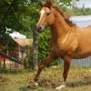 Up to 60% Off Horseback Rides in Campbellville