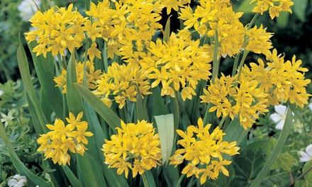 Spring Colour Bulb Collection