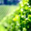 Visita a bodegas y cata de vinos
