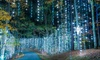 Up to 41% Off Fantasy In Lights at Callaway Resort and Gardens