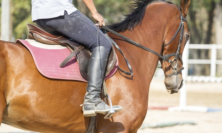 Two Horseback-Riding Lessons at Raj Le Stable (75% Off)