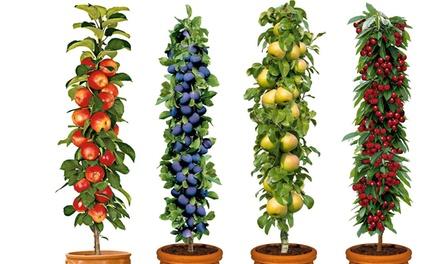 Set de árboles frutales